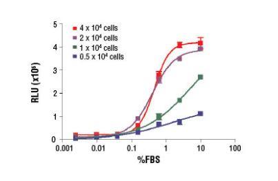 Brdu Cell
