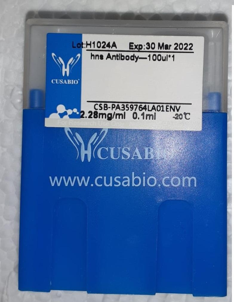 cusabio antibody